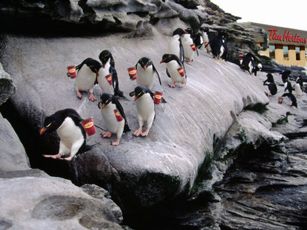 PenguinsWithTimmiesCups
