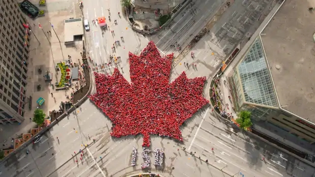 the-living-maple-leaf-as-seen-from-above.jpg